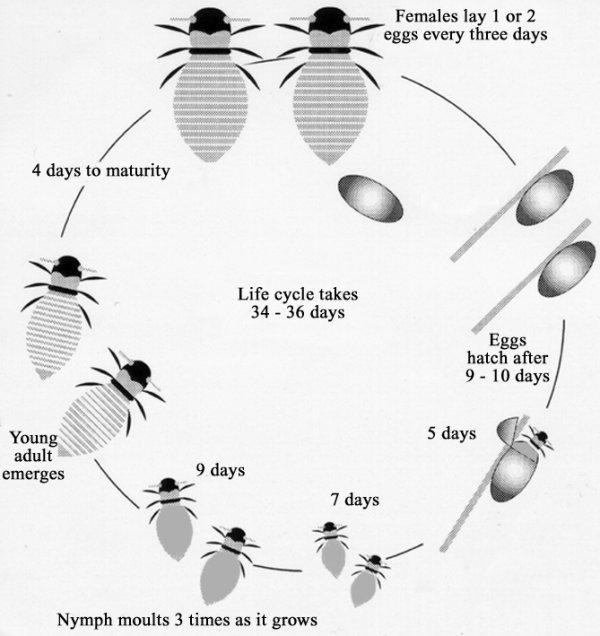 IELTS Writing Task 1: life cycle diagram - ielts-simon.com