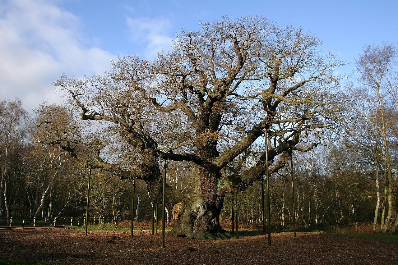 Ielts simon ielts reading major oak fandeluxe Image collections